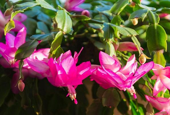 Cactus Landscapes Vegetable Nature Bloom Flower Pl