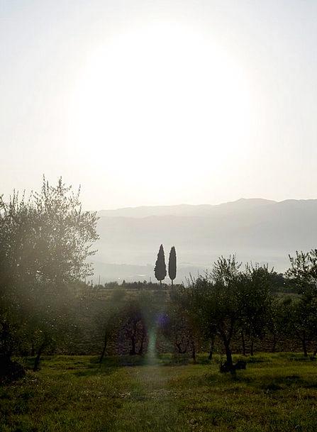 Cypress Trees Italy Tuscany