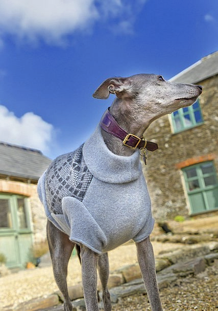 Dog Canine Whippet Greyhound Sky Barns Outbuilding