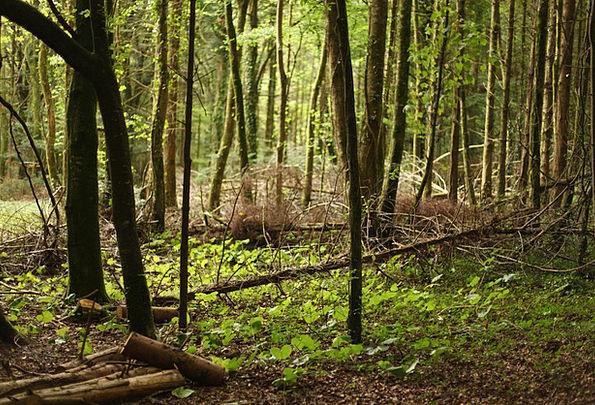 Forest Woodland Landscapes Sapling Nature Autumn L