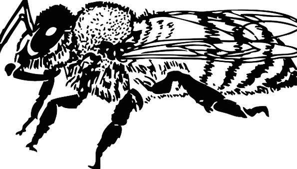 Bee Bugs Germs Honeybee Colony Insect Bug Beekeepi
