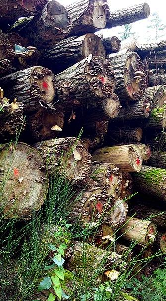 Holzstapel Landscapes Nature Autumn Fall Tree Trun