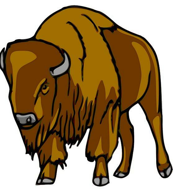 Bison Intimidate Animal Physical Buffalo Wildlife
