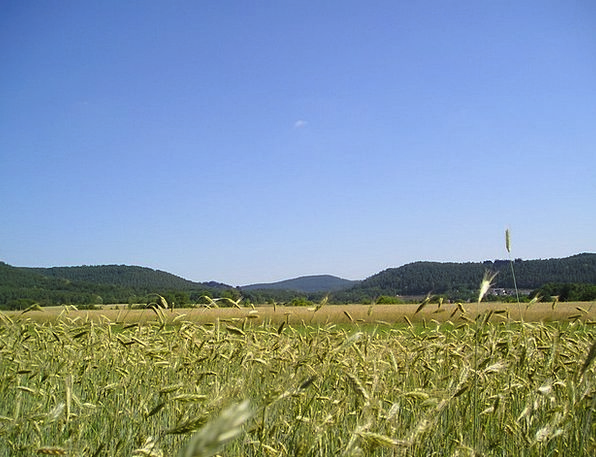 Cornfield Landscapes Countryside Nature Palatinate