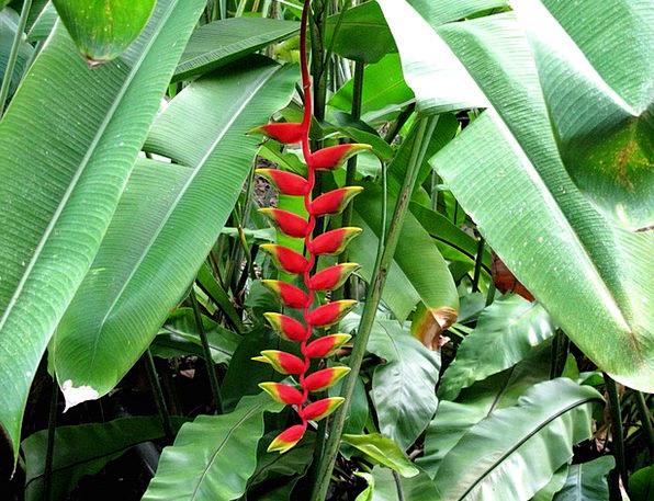 Red Bloodshot Landscapes Nature Flower Floret Bana