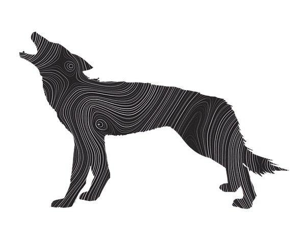 Wolf Casanova Outline Howling Loud Silhouette Wild