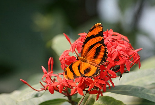 Butterfly Landscapes Floret Nature Nature Countrys