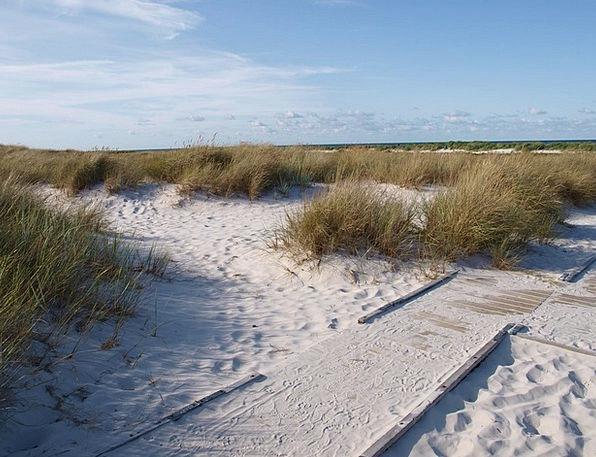 Sea Marine Bank Dune Grass Dune