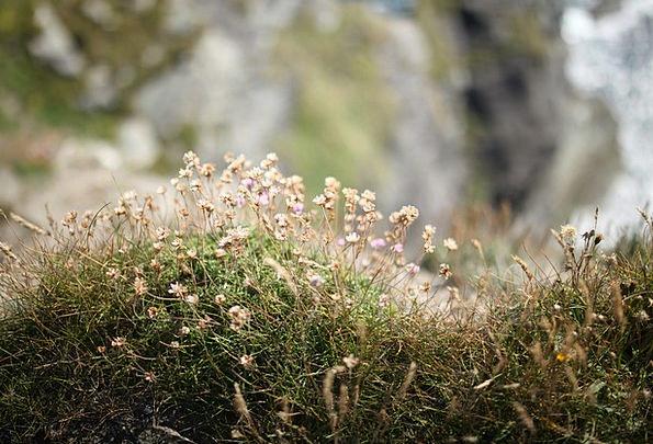 Flowers Plants Landscapes Precipice Nature Grass L