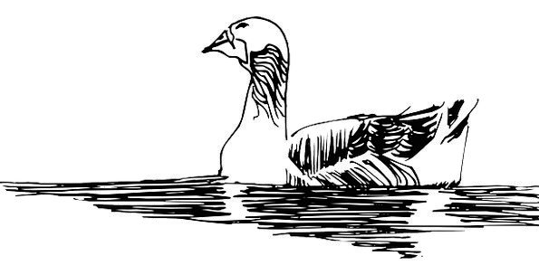 Water Aquatic Draft Bird Fowl Sketch Duck Stoop Fe