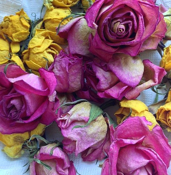 Roses Designs Landscapes Nature Rose Bloom Trocken