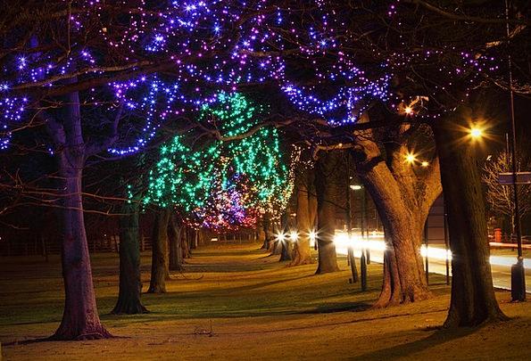 Tree Sapling Traffic Plants Transportation Light B