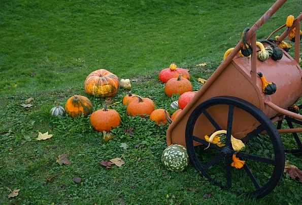 Wheelbarrow Barrow Pumpkins Decorative Squashes Ha