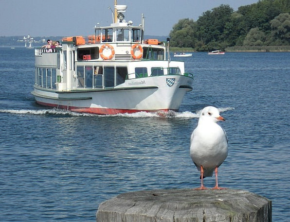 Tourism Vacation Vessel Travel Seagull Ship See Un
