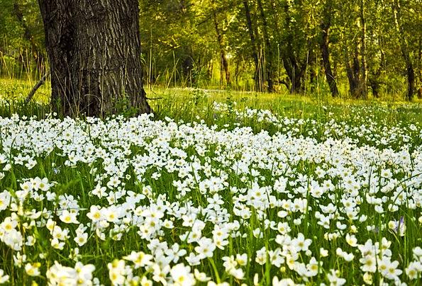 Flowers Plants Landscapes Snowy Nature Fields Aren