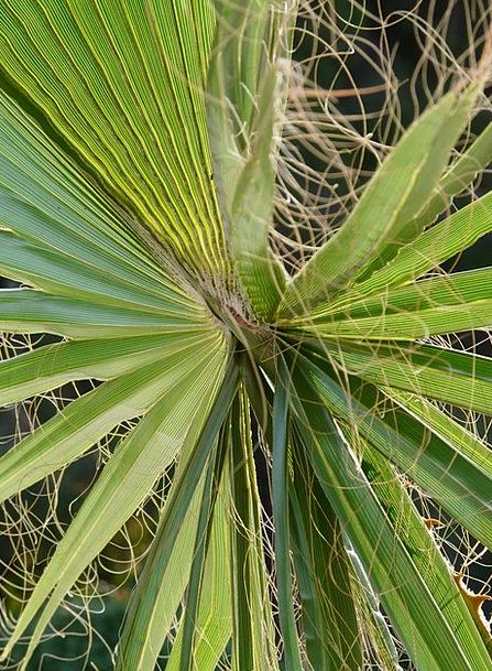 James Landscapes Nature Washington Palm Palm Frond