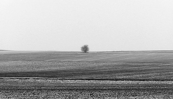 Loneliness Aloneness Isolated Tree Sapling Lonely