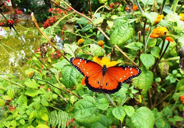 Butterfly Landscapes Plot Nature Flowers Garden Co