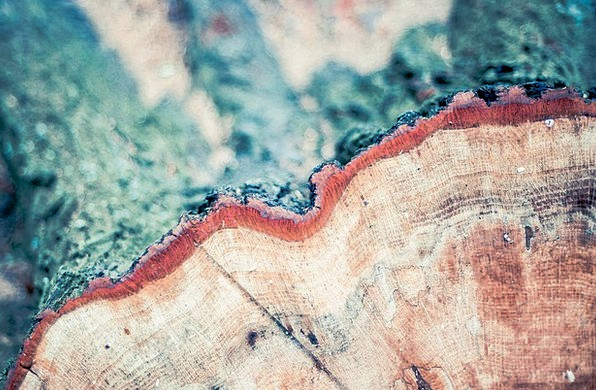 Annual Rings Landscapes Timber Nature Sawed Off Wo