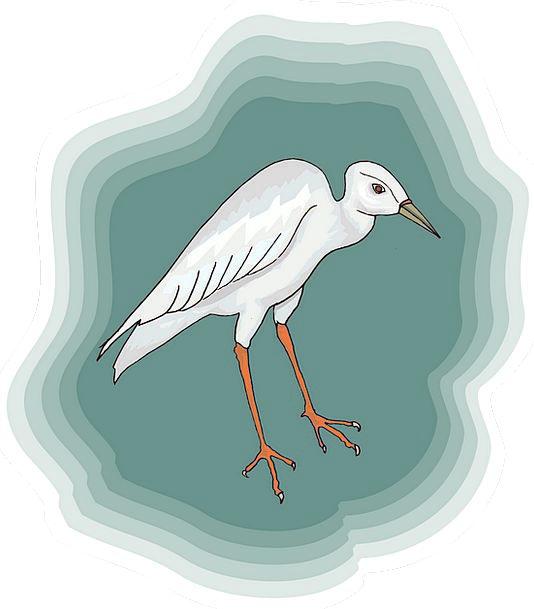 Bird Fowl Snowy Heron White Free Vector Graphics S