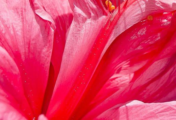 Flower Floret Landscapes Flushed Nature Beautiful
