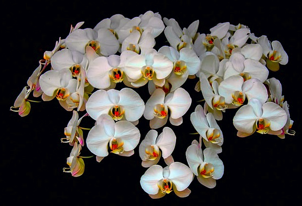 Orchids Landscapes Floret Nature Nature Countrysid