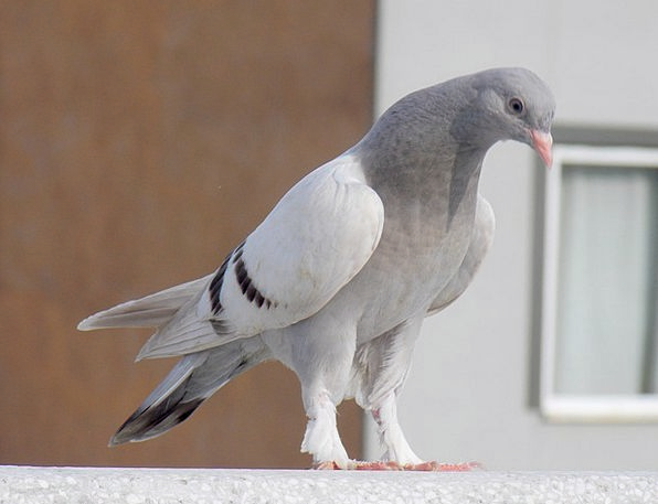 Pigeon Mark Landscapes Lovely Nature Nature Countr