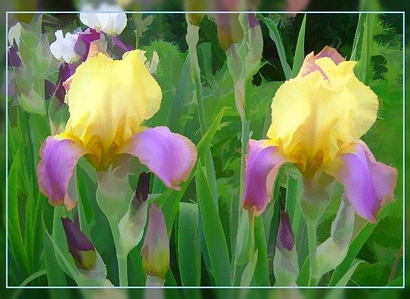 Lily Landscapes Floret Nature Garden Plot Flower E