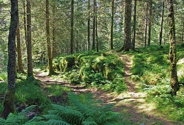 Forest Woodland Landscapes Nature Norway Scandinav