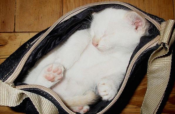 Cat Feline Animal Physical Kitten Animals Faunae K