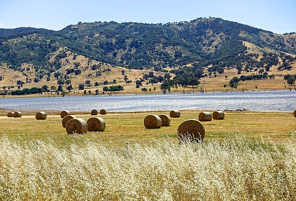 Hay Bales Landscapes Nature Hay Straw Harvest Coun