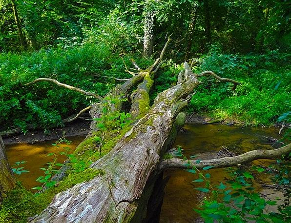 Jungle Rainforest Landscapes Sapling Nature River