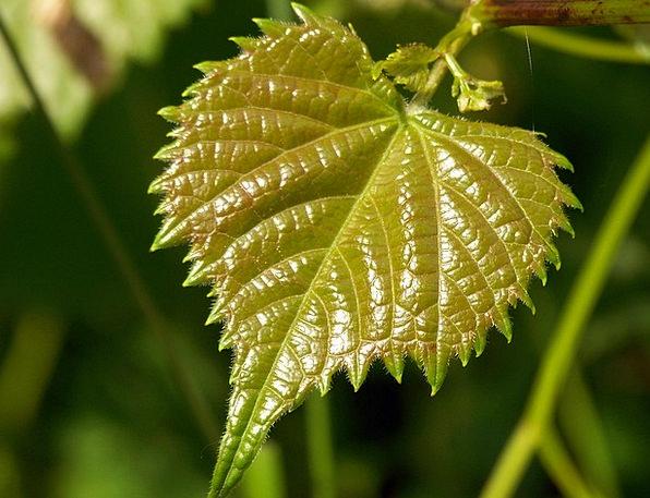 Leaf Landscapes Lime Nature New Novel Green Sprout
