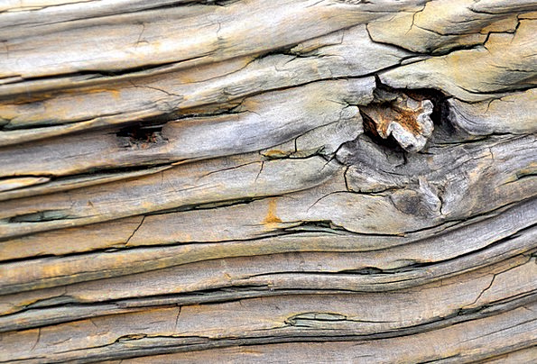 Wood Timber Landscapes Sapling Nature Forest Woodl