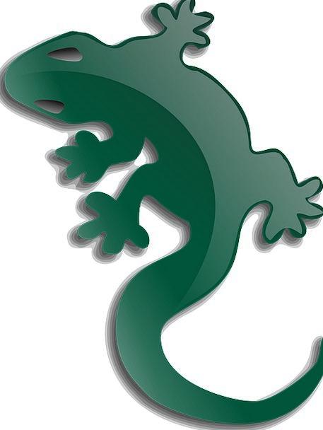 Lizard Landscapes Nature Reptile Gecko Free Vector