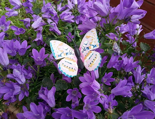 Butterfly Bug Public Record Insect Flowers Plants