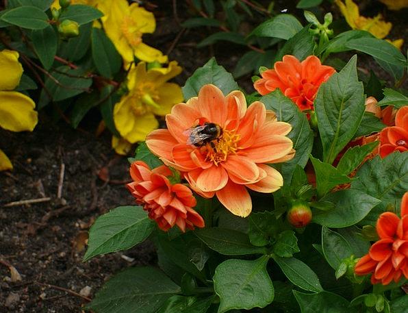 Flowers Plants Landscapes Nature Orange Carroty As