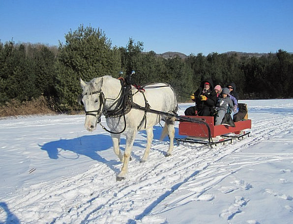 Horse Mount Traffic Toboggan Transportation Sleigh