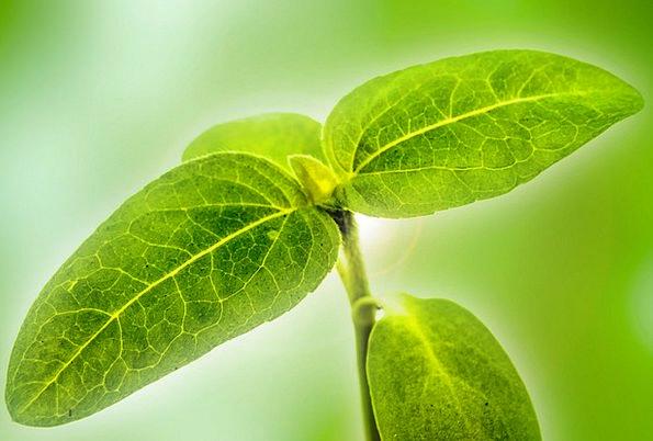 Plant Vegetable Landscapes Floret Nature Leaves Gr