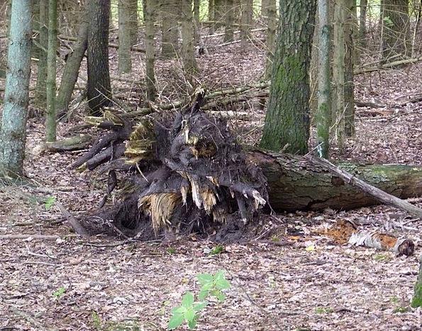 Illussion Sapling Root Origin Tree Monster Devil F