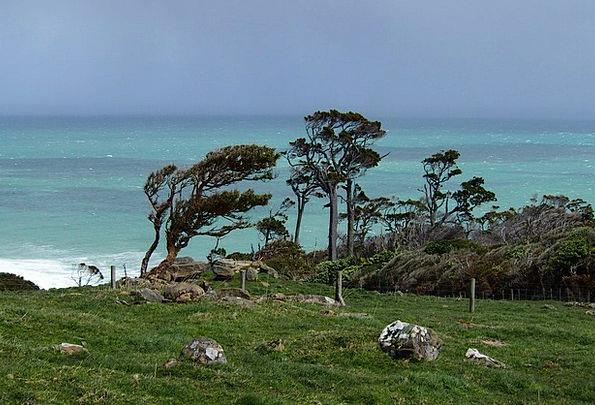 New Zealand Landscapes Plants Nature Wind Breeze T