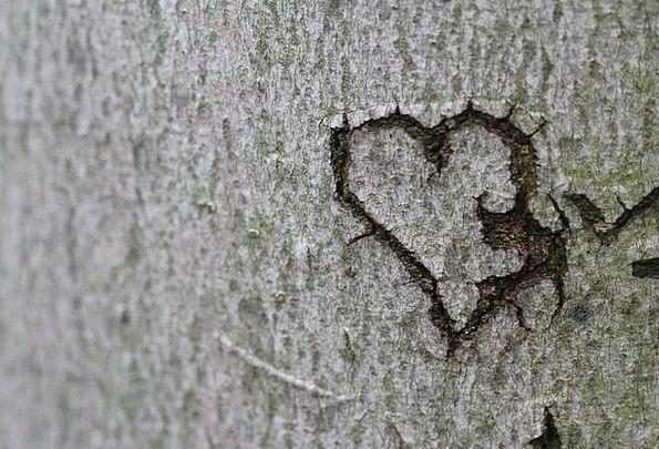 Heart Emotion Love Darling Declaration Of Love Rel