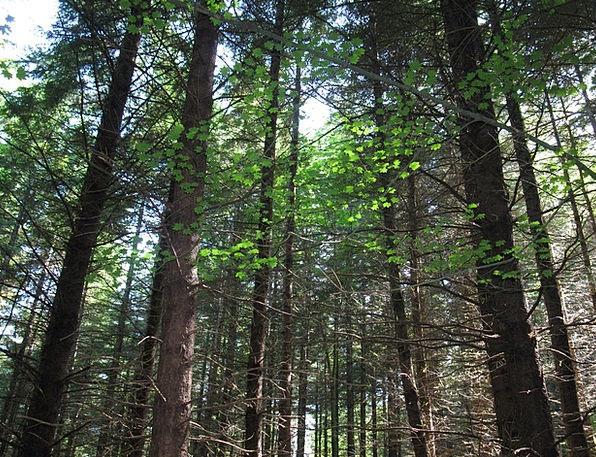 Forest Woodland Landscapes Sapling Nature Sunlight