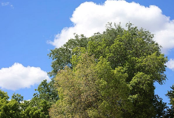 Trees Landscapes Countryside Nature Plants Florae