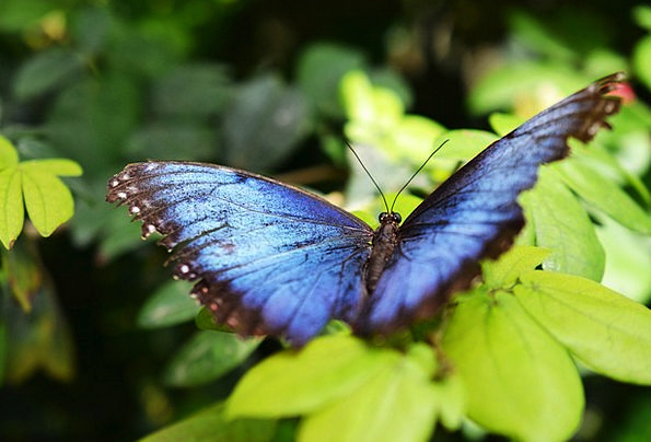 Butterfly Landscapes Bugs Nature Flowers Insects T