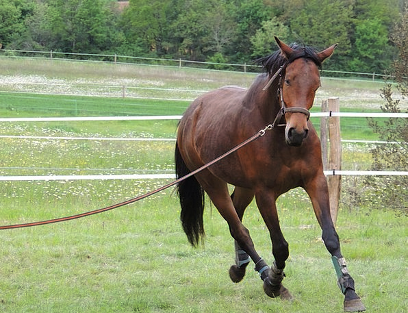 Horseback Riding Mount Sport Diversion Horse Anima