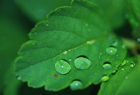 Leaf Landscapes Drop Nature Water Aquatic Droplet