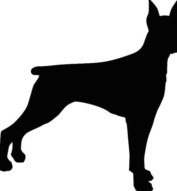 Dog Canine Animal Physical Doberman Free Vector Gr