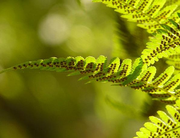 Fern Leaf Landscapes Taillight Nature Nature Count