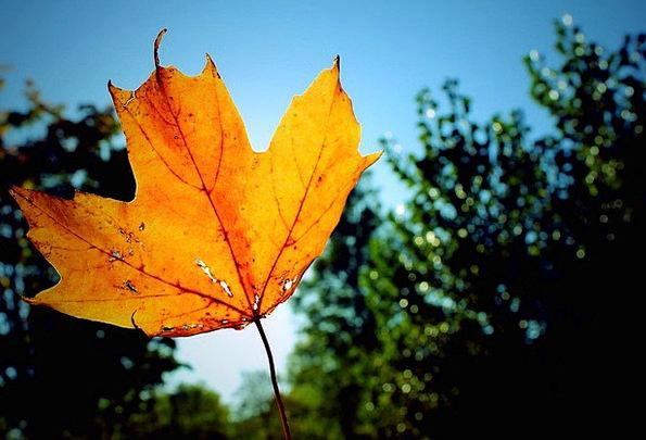 Leaf Landscapes Reduction Nature Colour Fall Seaso